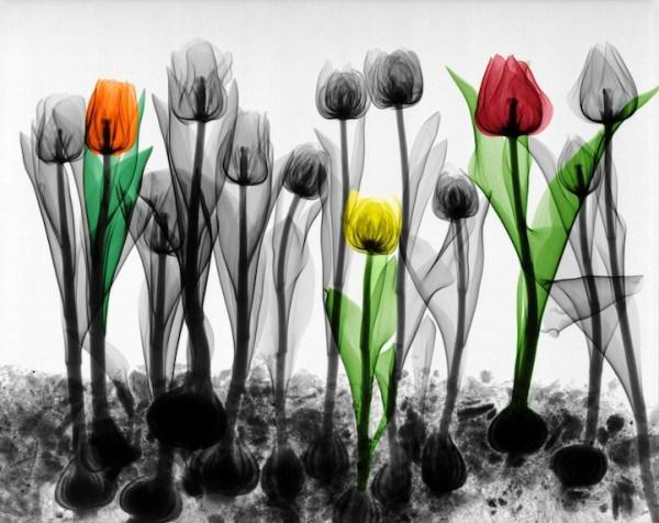 تصاویر فوق العاده از طبیعت با اشعه X