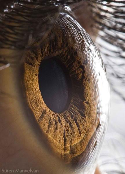 نمای نزدیک چشم انسان (6)