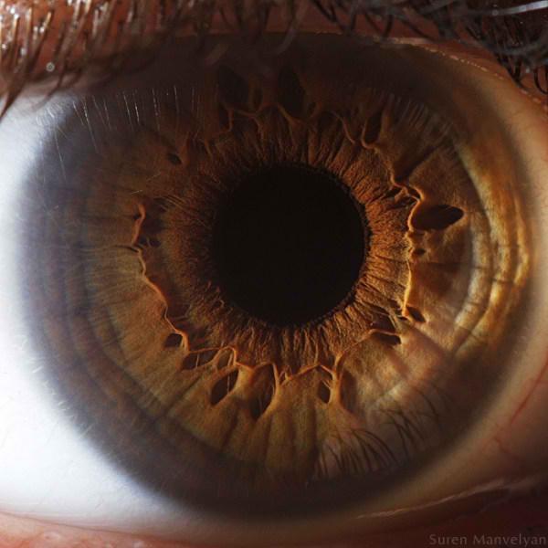 نمای نزدیک چشم انسان (2)