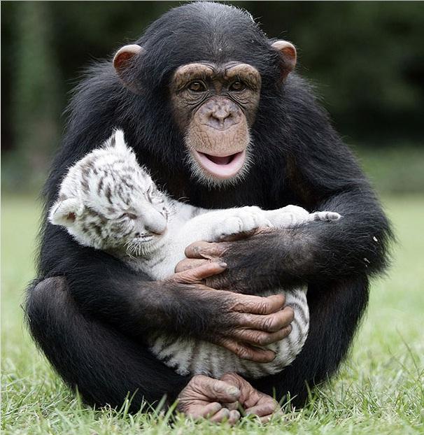 دوستی های غیر معمول در دنیای حیوانات (تصویری)