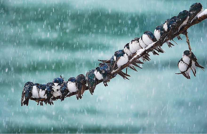 تصاویری جادویی از حیوانات در زمستان