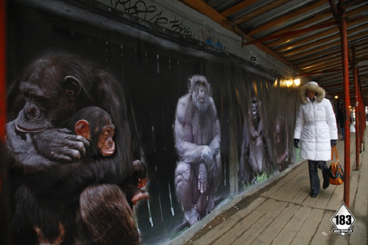 street-artists-pavel-apes1
