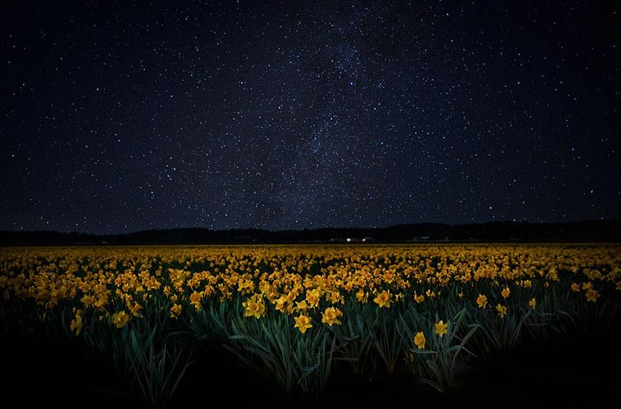 ۱۵ تصویر رویایی از مزارع رنگارنگ گل ها