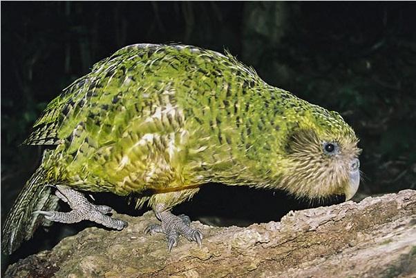 تولد اعجاب انگیز پرنده ای نادر