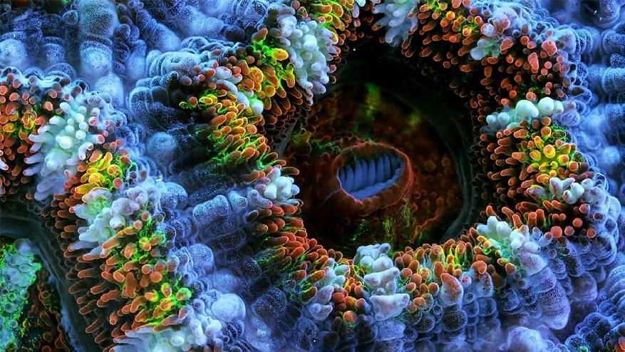 تصاویر رویایی از مرجان ها