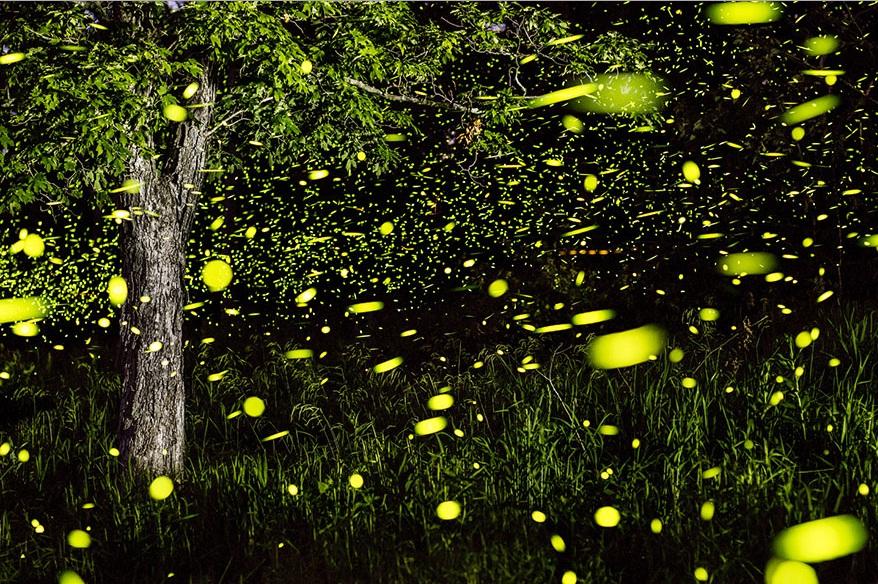 تصاویر رویایی از کرم های شب تاب در عکاسی طولانی مدت