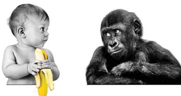 آیا حیوانات هم می توانند زمان را درک کنند؟