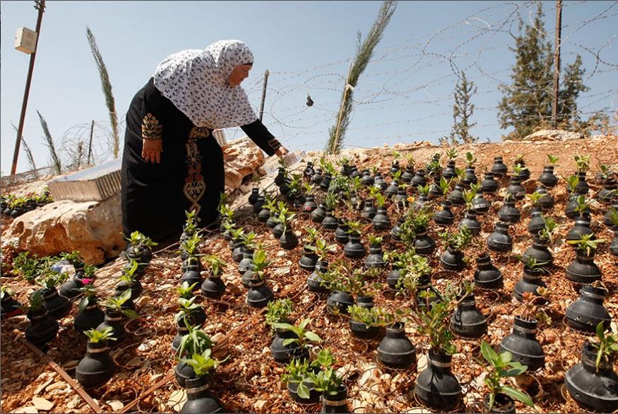 اقدام فرهنگی جالب زن فلسطینی