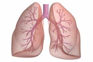 چرا هنگام دم، تنها اکسیژن جذب شش ها می شود؟