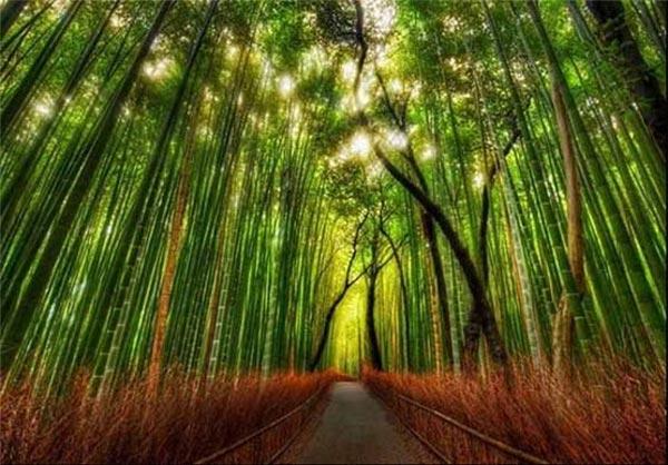 آیا عملکرد گیاهان در جذب دی اکسید کربن با هم تفاوت دارد؟