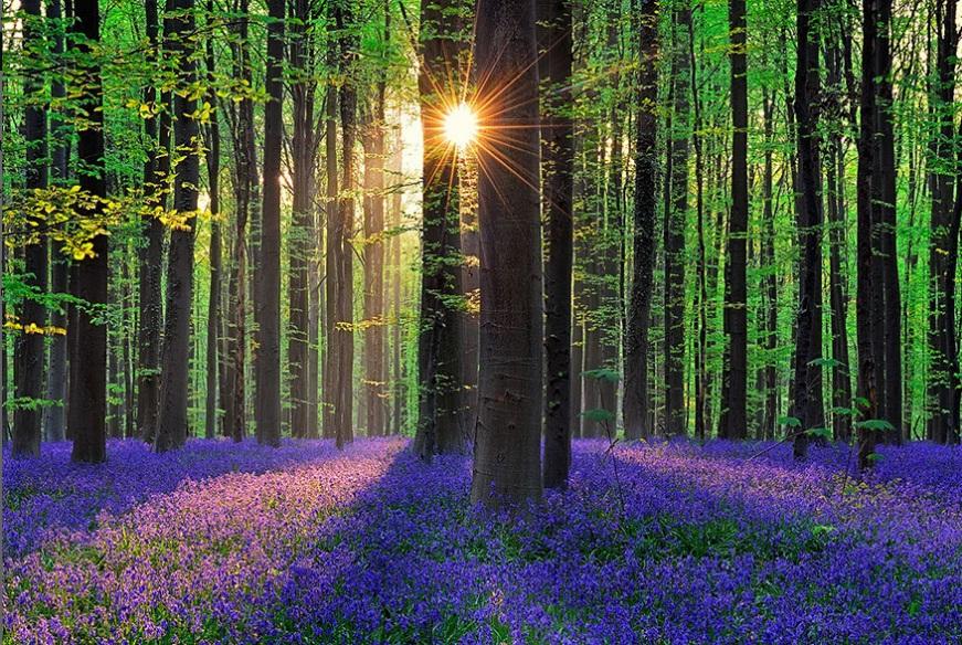 جنگلی اسرار آمیز در بلژیک