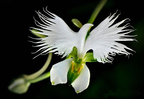 ۱۷ گل شگفت انگیز که شبیه چیز دیگری هستند