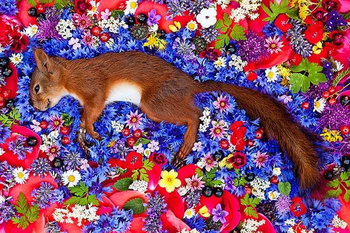 حیوانات مرده در بستری از گل