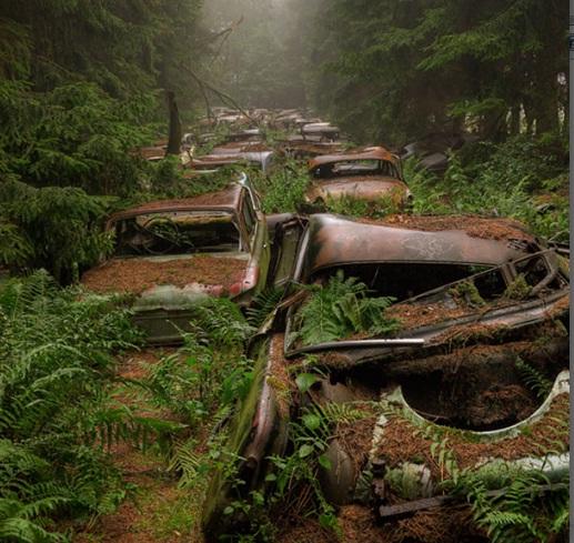 ترافیک ۷۰ ساله در جنگل های بلژیک