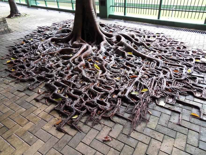 ۱۰ نبرد ریشه های درخت در برابر بتن