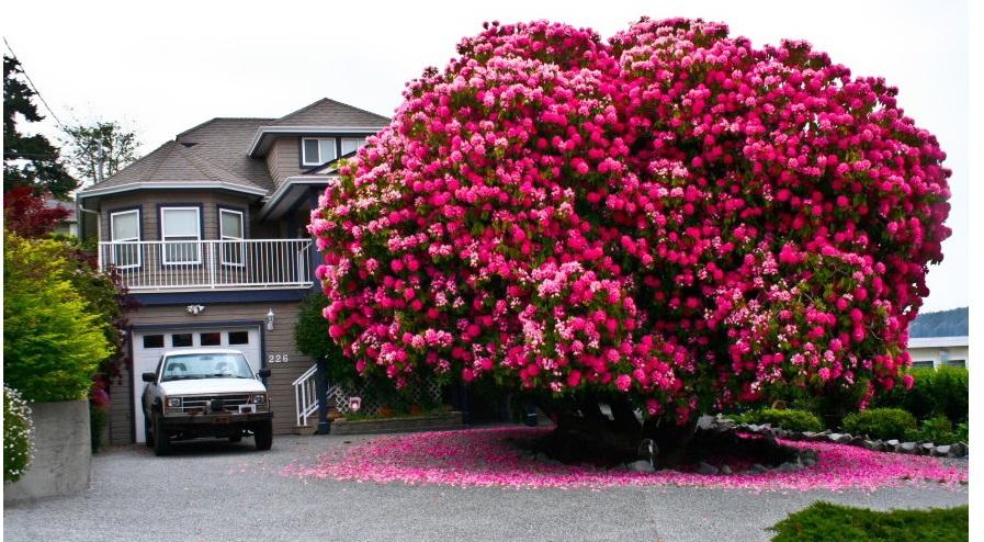 ۱۶ مورد از باشکوه ترین درختان دنیا
