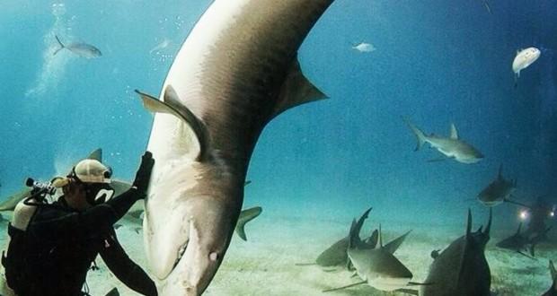 نهنگ های قاتلی که شکارشان را به خلسه می برند!