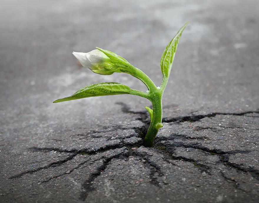 زندگی راه خود را می یابد…
