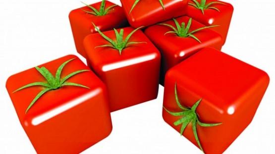 گوجه-فرنگی-اصلاح-ژنتیکی-620×330
