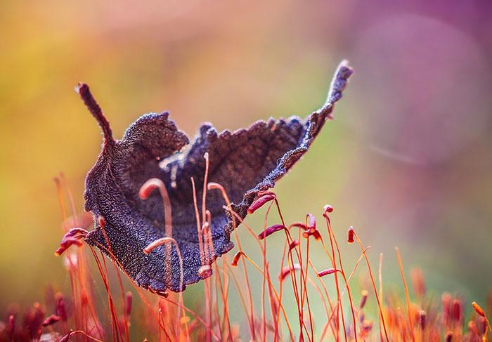عکس های جادویی از پاییز
