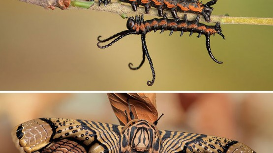 caterpillar-moth-butterfly-before-after-metamorphosis-coverimage