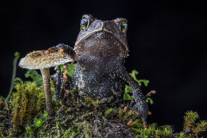 frog-photography-robin-moore-coverimage