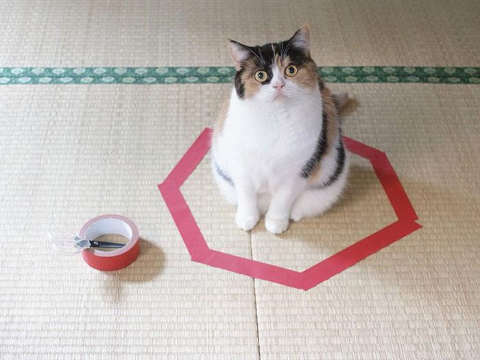 چگونه گربه را در سه مرحله به دام بیندازیم؟
