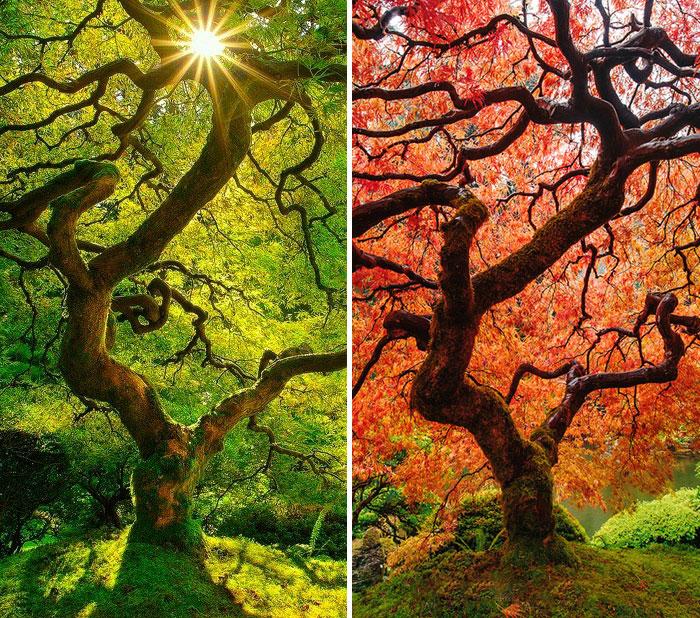 تصاویر زیبا از قبل و بعد یک منظره پاییزی