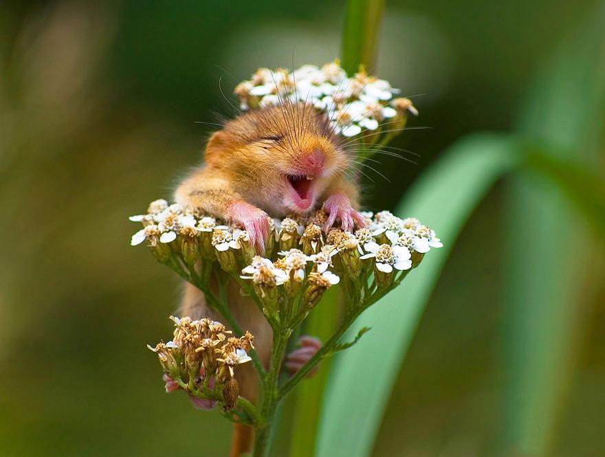 موش های وحشی کوچولو