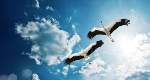 آیا پرندهها از میان ابرها پرواز میکنند؟