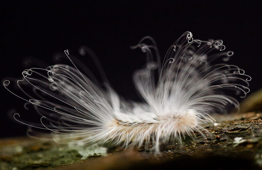 حیوانات با موهای جادویی