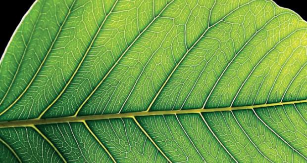 آیا گیاهان زیر نور مهتاب هم فتوسنتز میکنند؟