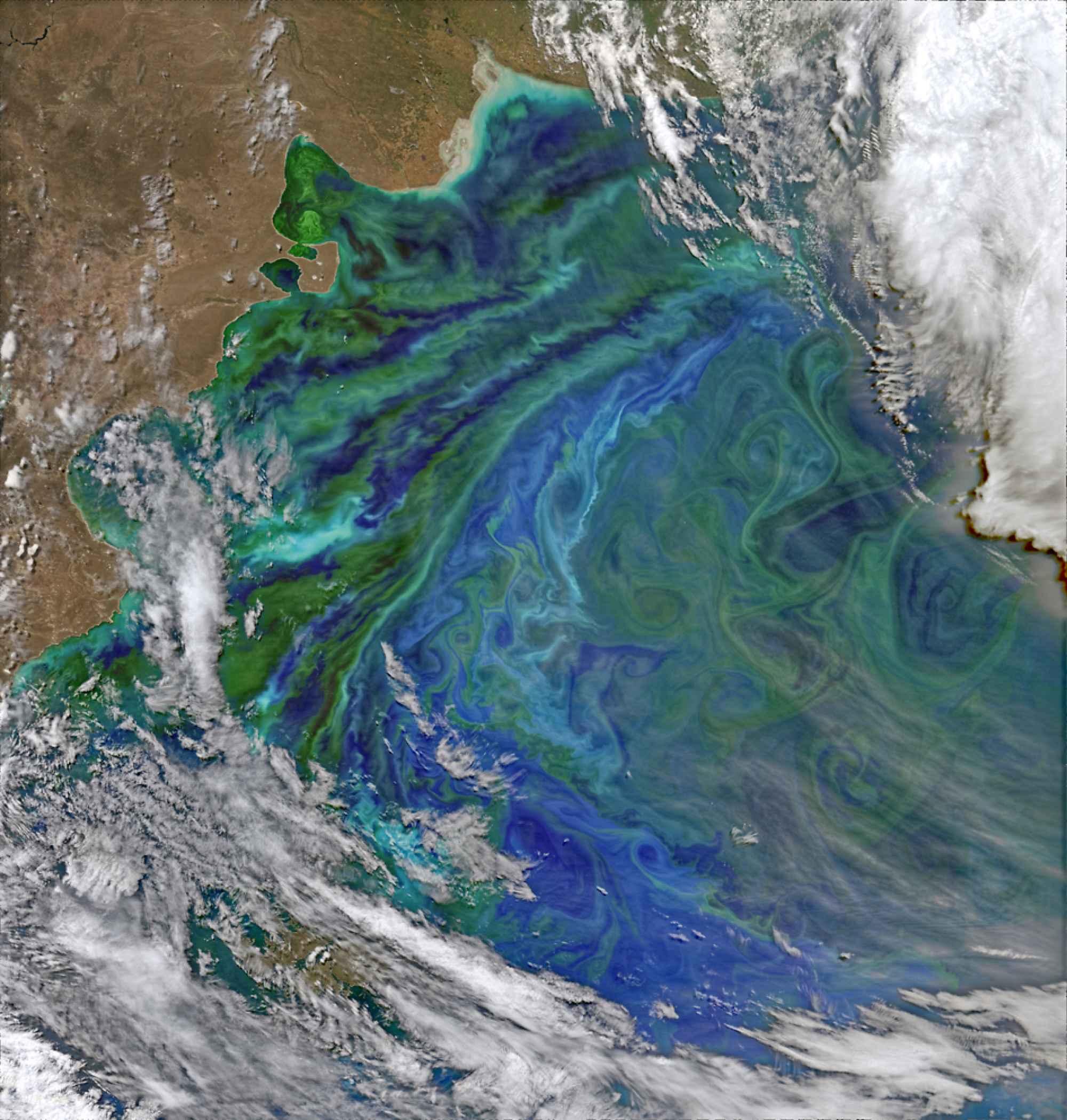 patagonia-plankton