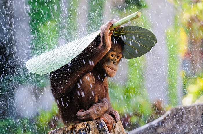 sony-world-photography-awards-entries-2015-coverimage