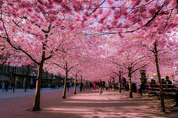 ۱۵ خیابان جادویی پوشیده از گل ها و درختان
