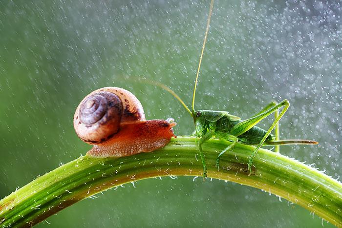 جهان ماکروی جادویی حلزون و حشرات