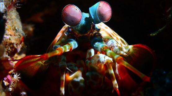 underwater-creatures-alexis-golding-coverimage