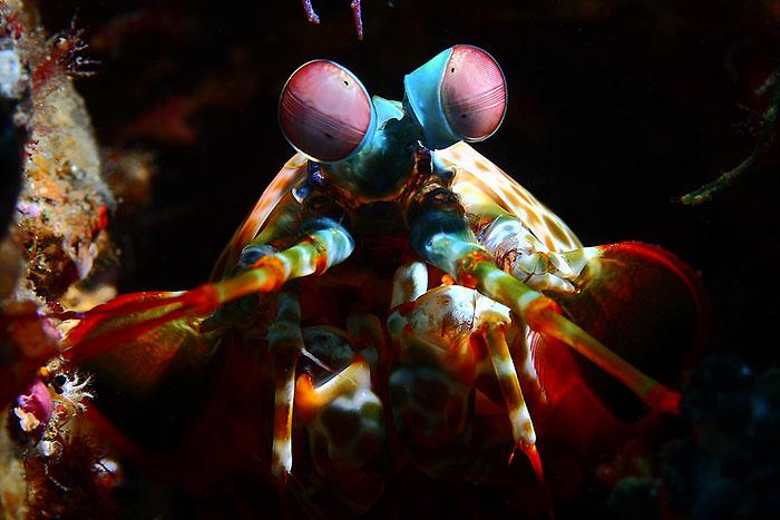 موجودات زیر آبی شگفت انگیز