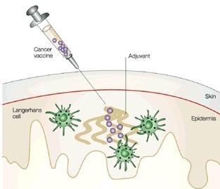 بهره برداری از واکسن های سرطان