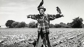 Two crows perching on a scarecrow in a field