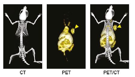 هدف گیری و تصویربرداری درون بافتی از عروق تومور با نانوگرافن