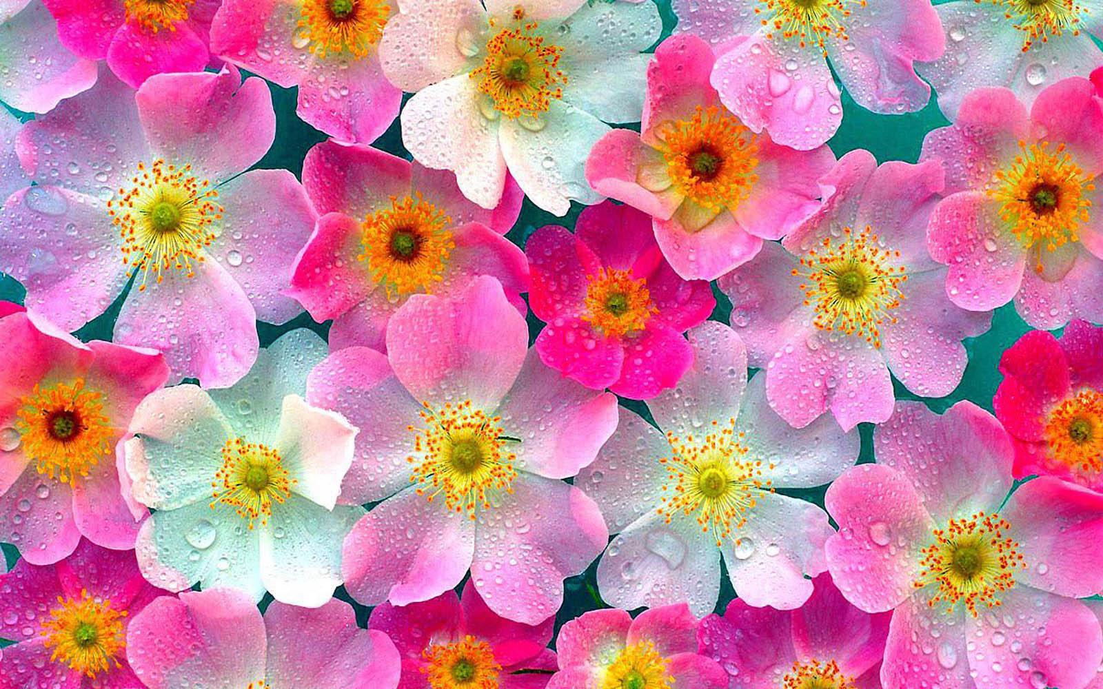 چرا گلها معطرند؟