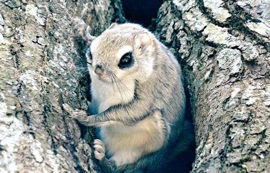 جزیره هوکایدوی ژاپن زیستگاه ۷ حیوان باور نکردنی زیبا