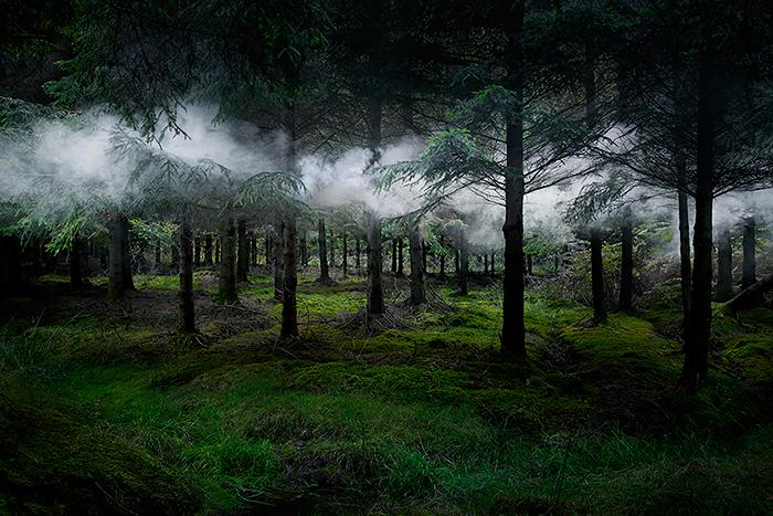 تبدیل جنگل به اثر هنری چشم نواز