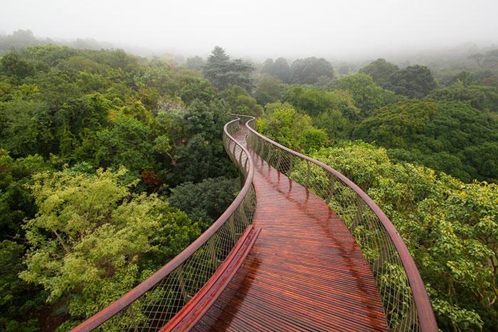 مسیر گردشگری بر فراز درختان