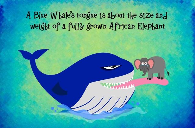 blue-whale-tongue-n-elephant