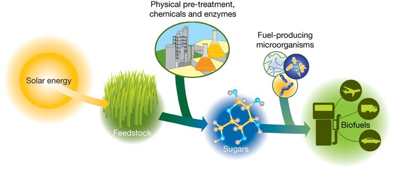 میکروارگانیسم ها در فرایند زیست تبدیل