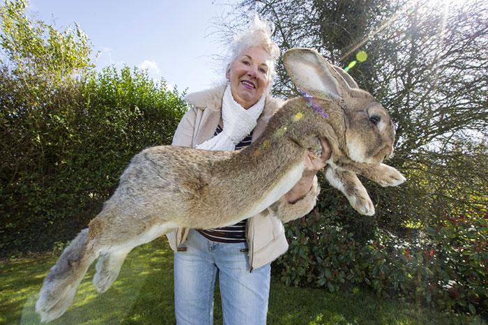 بزرگترین خرگوش جهان، پدر یا پسر!