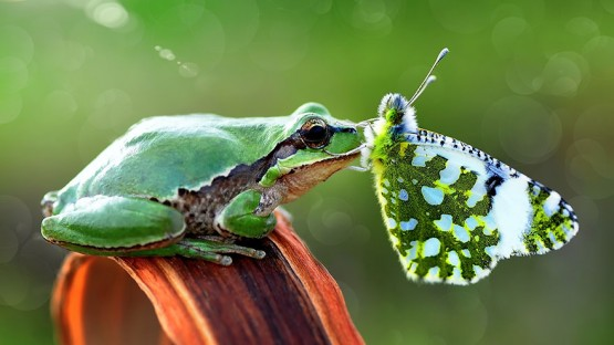 animals-with-butterflies-12__880