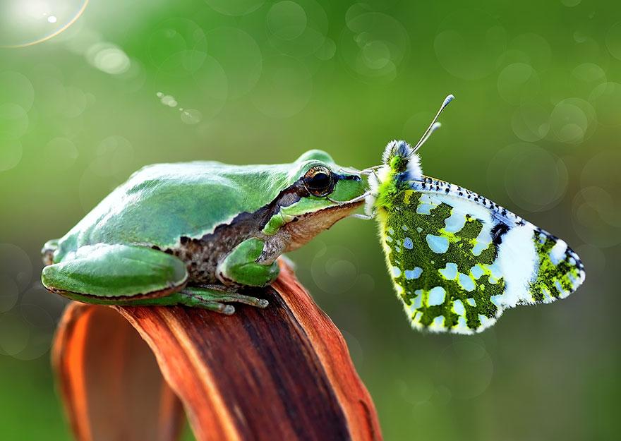 ۱۰+ تصاویر ناب از حیوانات با پروانه ها، دیزنی در دنیای واقعی